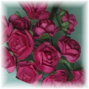 Large Cabbage Roses