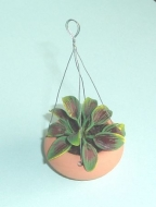 Miniature Hanging Basket
